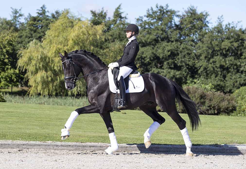 Suarez-stallion-web
