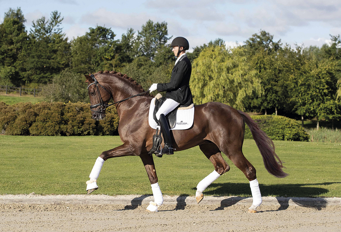 Vivino20-red-web-stallion-2Schweif