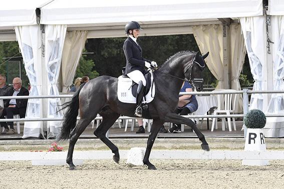Zauberlehrling-stallion-web