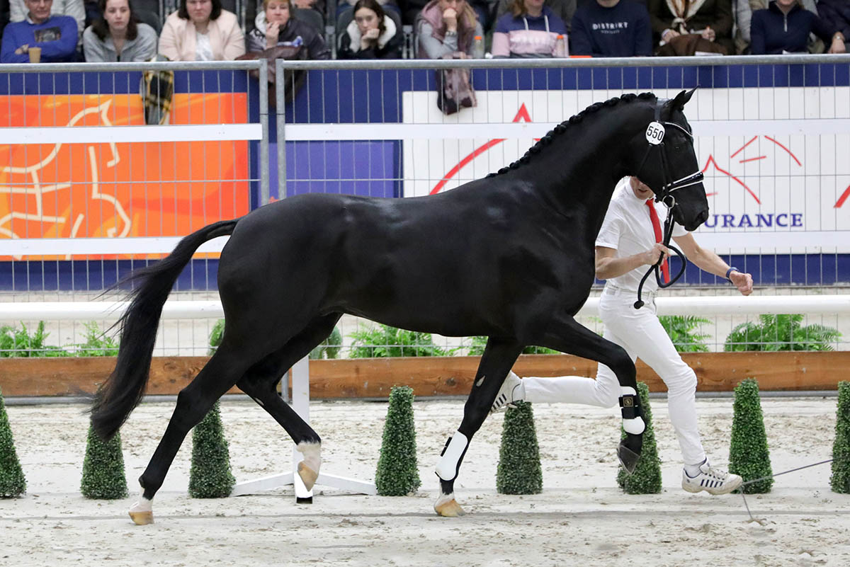 horses.nl-550 v. Totilas juist-WEB
