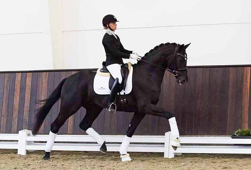 Bonjour-web-stallion