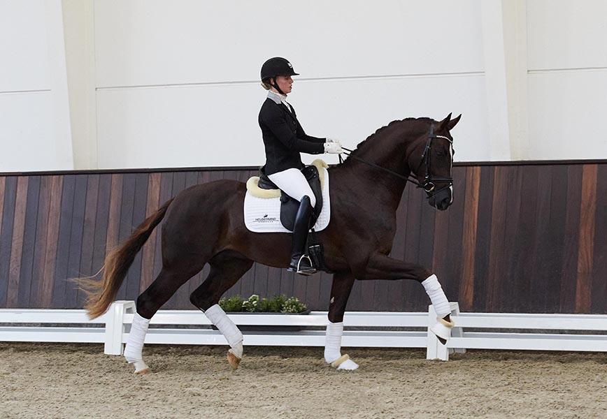 Fortunate-WEB-stallion