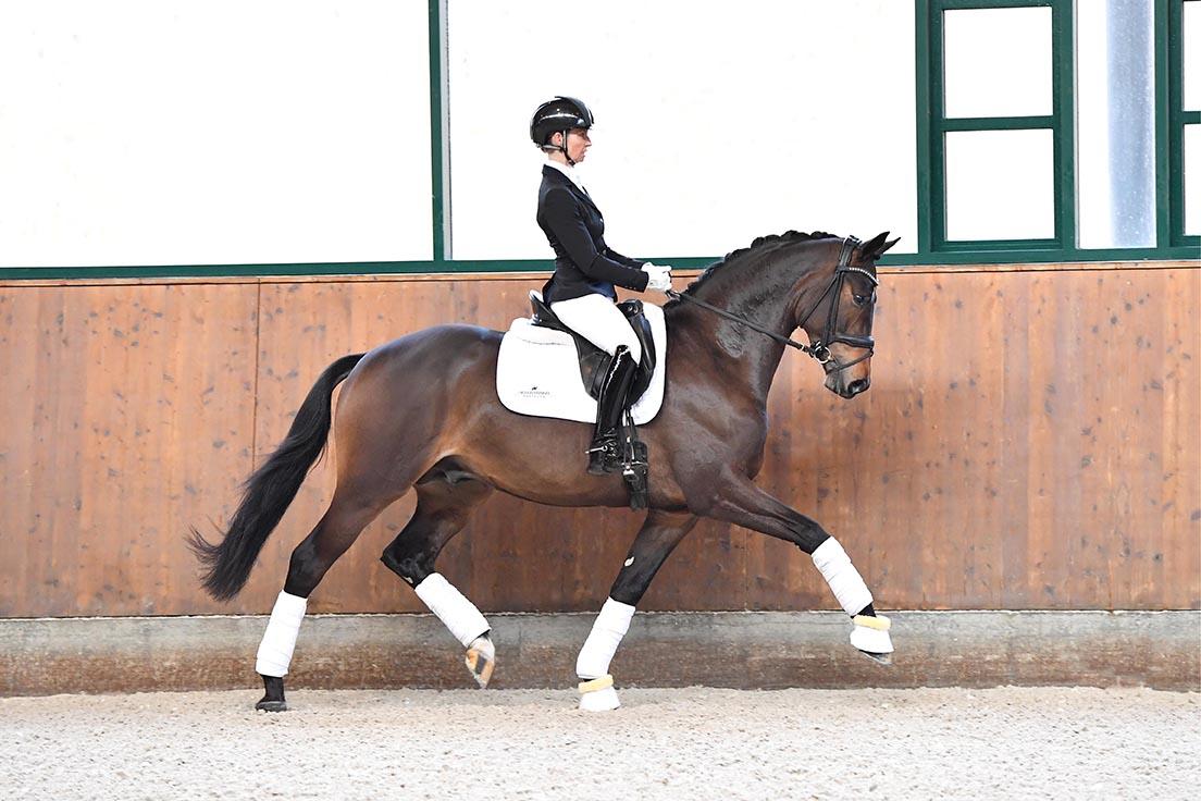 Rheinklang-WEB-stallion-01-21-04_310